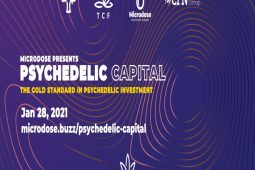 Psychedelic Capital